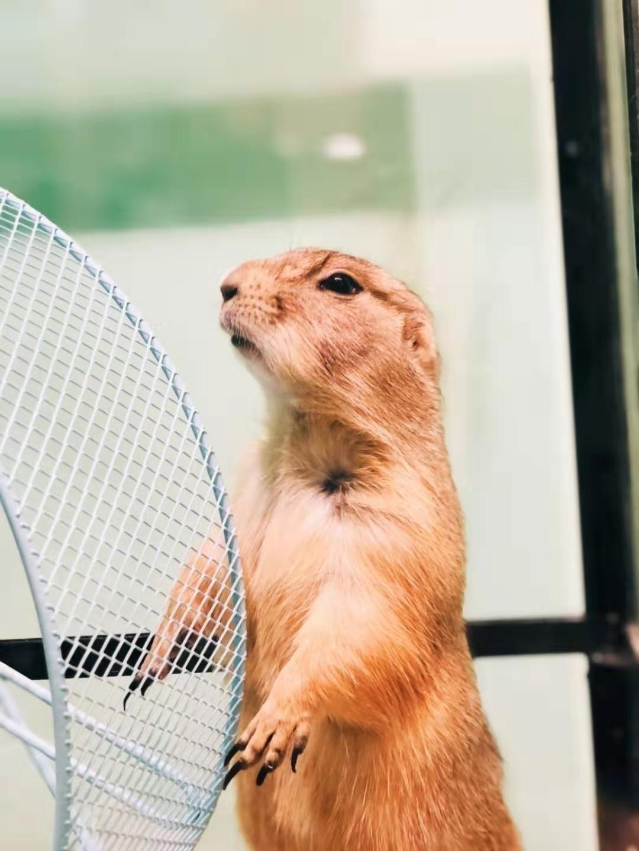 【上海】外滩|藏在外滩的动物园!49.9元抢萌小萌萌宠乐园1大1小亲子票!近距离与小动物接触!满地猫咪+羊驼+龙猫+土拨鼠+兔子+貂……带你走进神奇动物在哪里!